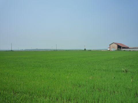 穀倉地帯 (2008年6月21日) | サイクルショップ あしびな